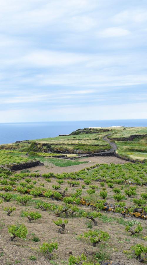 View of Pantelleria in Sicily